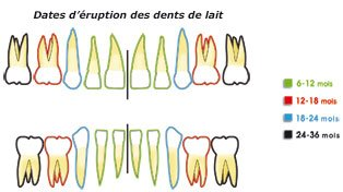 dents-enfant-eruption-c